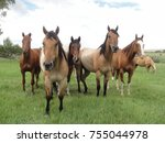 Beautiful Majestic Horses In...
