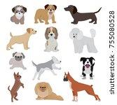 dog vector cute cartoon puppy... | Shutterstock .eps vector #755080528