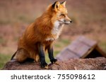 red fox and arctic fox | Shutterstock . vector #755098612