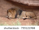 The Sleeping Lion