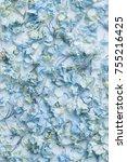 dry blue hydrangea flower... | Shutterstock . vector #755216425