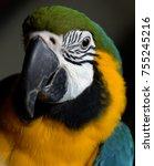 Parrot Portrait. Blue And Gold...