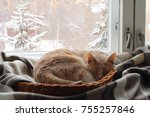 A Red Cat Sleeps In A Basket...
