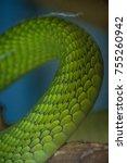 Small photo of Deadly green mamba skin closeup