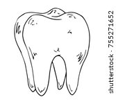 a tooth with four roots. tooth... | Shutterstock .eps vector #755271652
