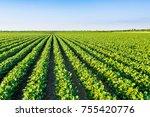 green ripening soybean field ... | Shutterstock . vector #755420776