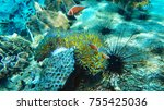 coral reef with sea urchins.... | Shutterstock . vector #755425036