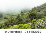 palm trees in tenerife   Shutterstock . vector #755483092