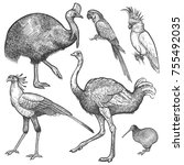 ara parrot  ostrich emu ... | Shutterstock .eps vector #755492035