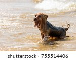 Small photo of Funny wet and soppy dog playing in water at sea beach has ridicules look