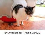 Cat Using Toilet  Cat In Litte...