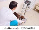 a veterinarian weighs a dog in... | Shutterstock . vector #755567065