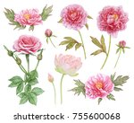 watercolor pink flowers... | Shutterstock . vector #755600068