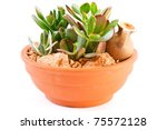 collection of succulents in a pot is isolated on a white background - stock photo