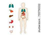 medical poster depicting human... | Shutterstock .eps vector #755750332
