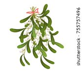 a sprig of mistletoe plants.... | Shutterstock .eps vector #755757496