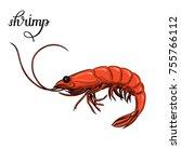 shrimp. seafood. vector...   Shutterstock .eps vector #755766112