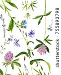 watercolor drawing wild plants... | Shutterstock . vector #755893798