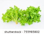 Green Oak Vegetable Salad...
