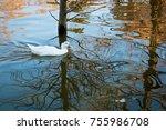 white duck on the pond | Shutterstock . vector #755986708