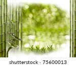 Beautiful Bamboo Border  Studi...