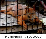 squirrel in a cage | Shutterstock . vector #756019036