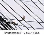 curious bird on a wire | Shutterstock . vector #756147166
