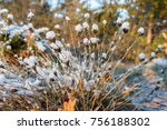 fluffy plant covered with snow  ... | Shutterstock . vector #756188302