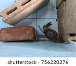 Alive Crab In Preparation Pond...