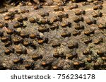brood of worker termite on tree ... | Shutterstock . vector #756234178
