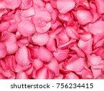 The Fresh Pink Rose Petal...