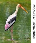 painted stork in green water... | Shutterstock . vector #756249952