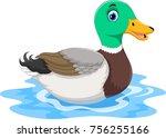 cute cartoon duck swimming  | Shutterstock .eps vector #756255166