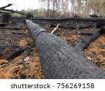 Destroyed Amazon rainforest by slash-and-burn, Brazil. Photo taken February 2, 2016 - stock photo