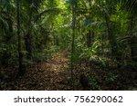 the amazon rainforest in manu...   Shutterstock . vector #756290062