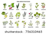 collection of best herbs for... | Shutterstock .eps vector #756310465