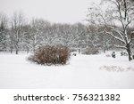 Snow Bush In Winter Park