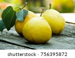 Pears Growing On A Branch With...