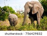 elephants at chobe national... | Shutterstock . vector #756429832