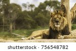 big male lion lying on the... | Shutterstock . vector #756548782