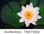 beautiful white waterlily or... | Shutterstock . vector #756571816