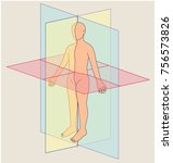 anatomical planes  human body... | Shutterstock .eps vector #756573826