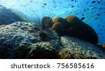 coral reef with sea urchins....   Shutterstock . vector #756585616
