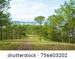 pine forest in highland ...   Shutterstock . vector #756603202