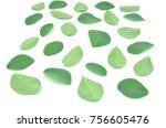 moringa leaves are green herbs... | Shutterstock . vector #756605476