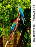 blue and yellow macaw ara... | Shutterstock . vector #756626875