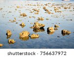 coral under the sea | Shutterstock . vector #756637972