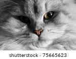 Cat Macro Shot  Furry Cat...