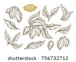 vector set of cocoa tree... | Shutterstock .eps vector #756732712
