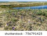 spring flowering tundra on the... | Shutterstock . vector #756791425